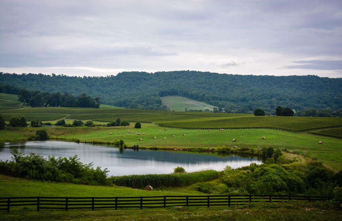 Monticello Winery Tour